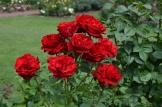 Royal Rosarian